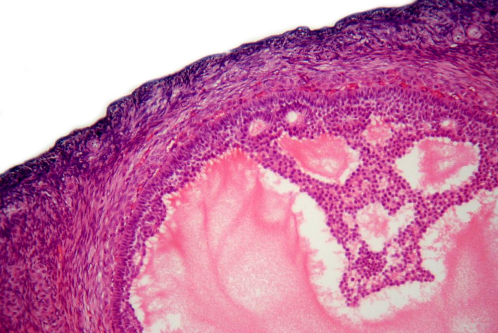 human-s-ovarian-follicle-microscopic-view-2-1156377