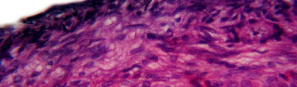 human-s-ovarian-follicle-microscopic-view-3-1156369